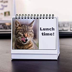 Funny Cat Mood Cards