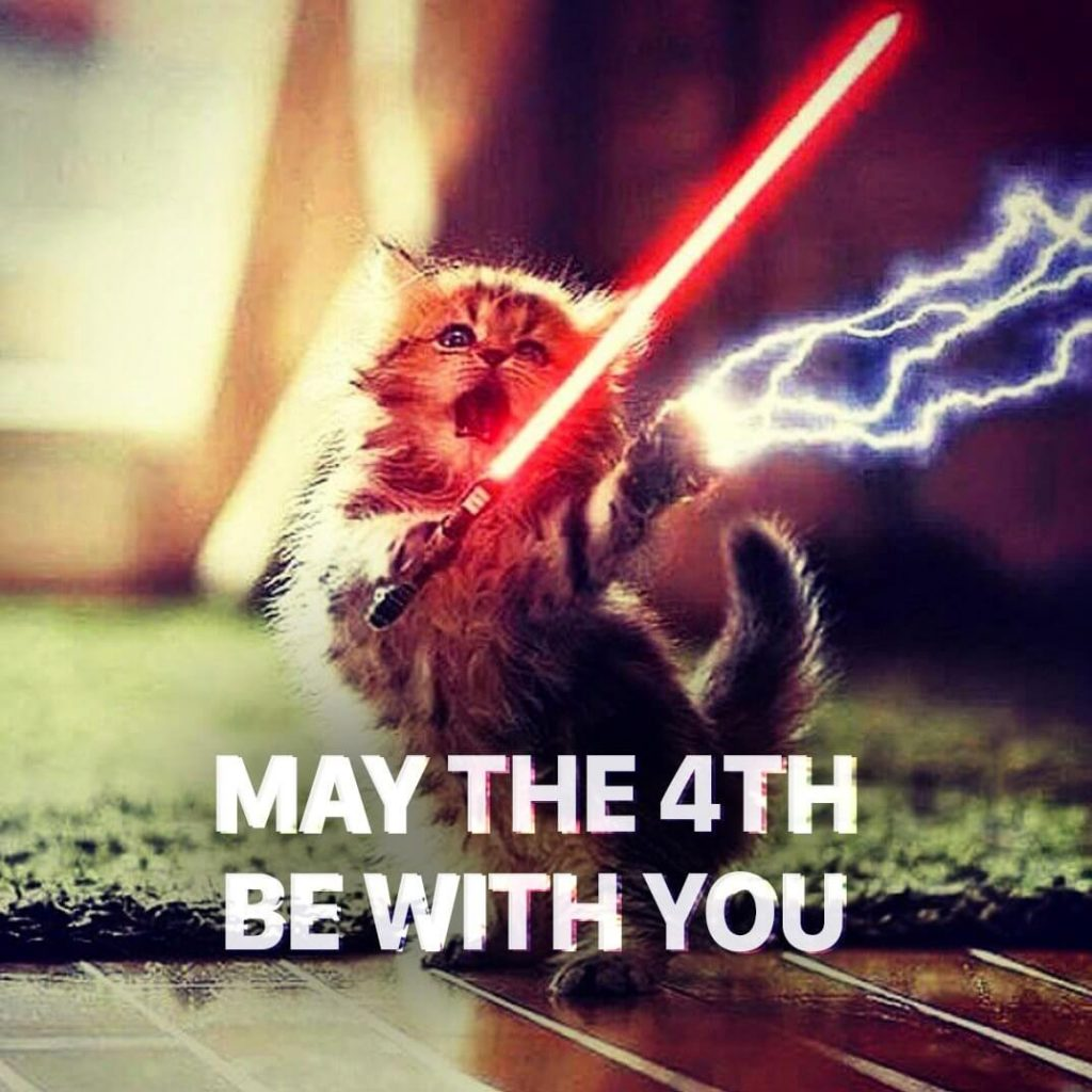 May The 4th funny Cat