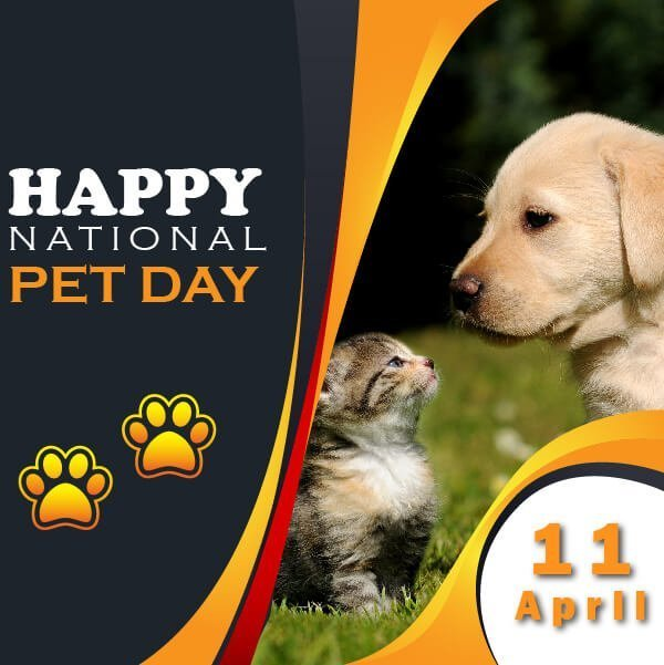 national pet day Banner